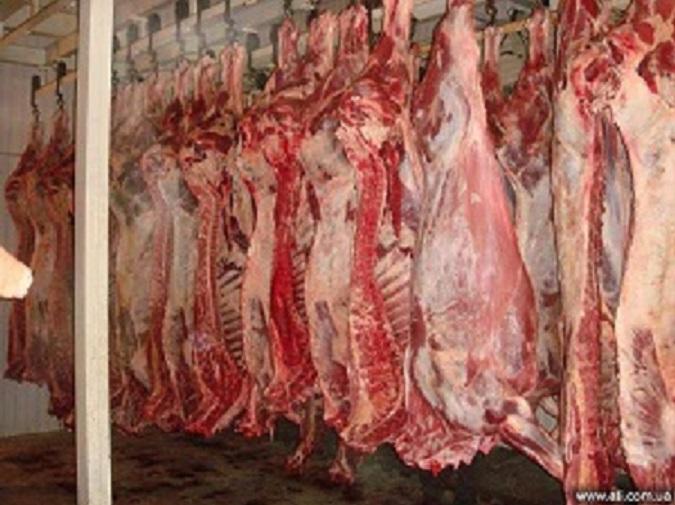 Мясо говядина, свинина 1,2 категория оптом от производителя/ от 180 р/кг