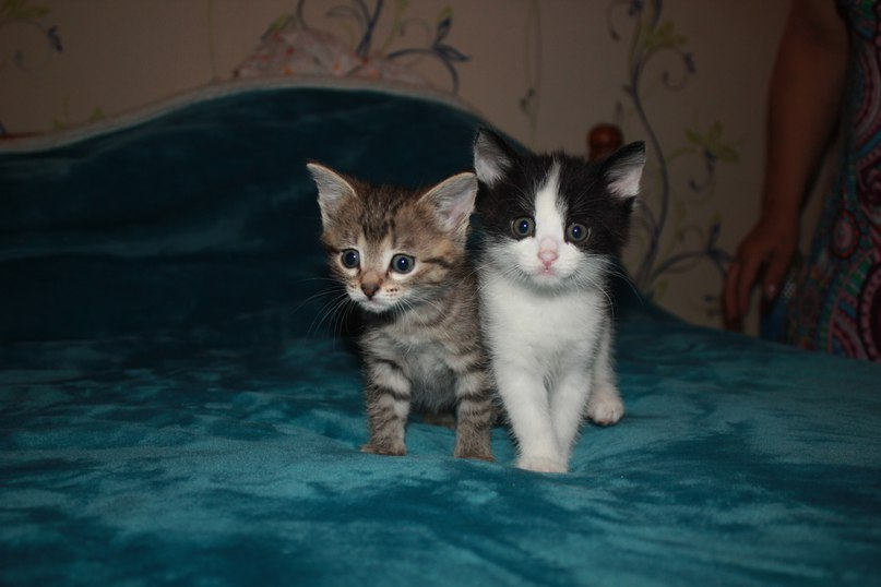 Котяточки
