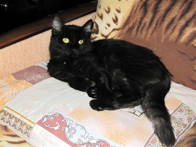 Котик  чёрный  9 месяцев