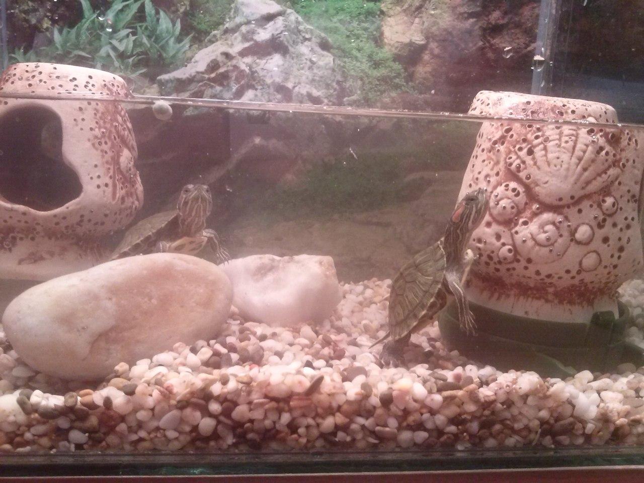 нужен аквариум для 2х черепашек!!!