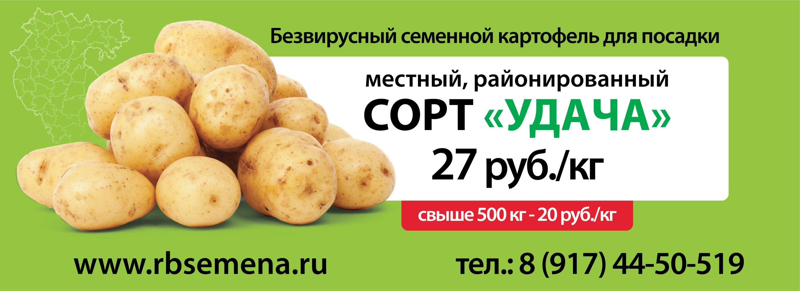 """Семенной картофель """" Удача"""""""