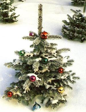 Для празднования Нового года в Башкортостане заготовят 143 тысячи елок