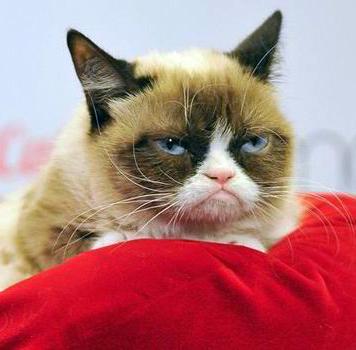 Кошка с угрюмым выражением мордочки озолотила хозяйку