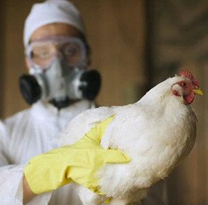 В Китае зафиксированы новые заболевшие птичьим гриппом.