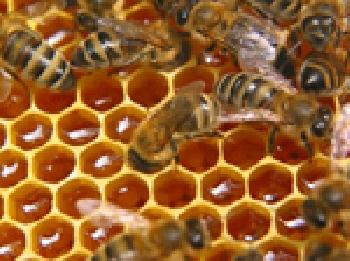 В Башкирии определят лучшего пчеловода